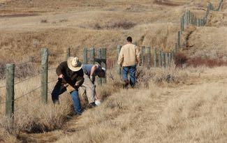The AFGA is helping make fences less harmful to pronghorns. Credit: AFGA.