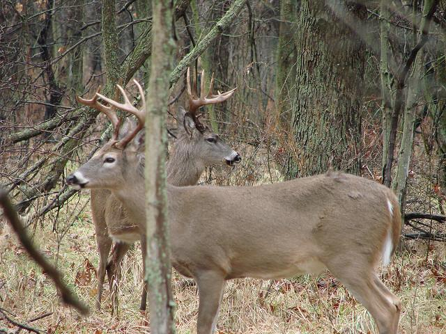 Credit: Russ Amptmeyer. Managing game is no easy task.