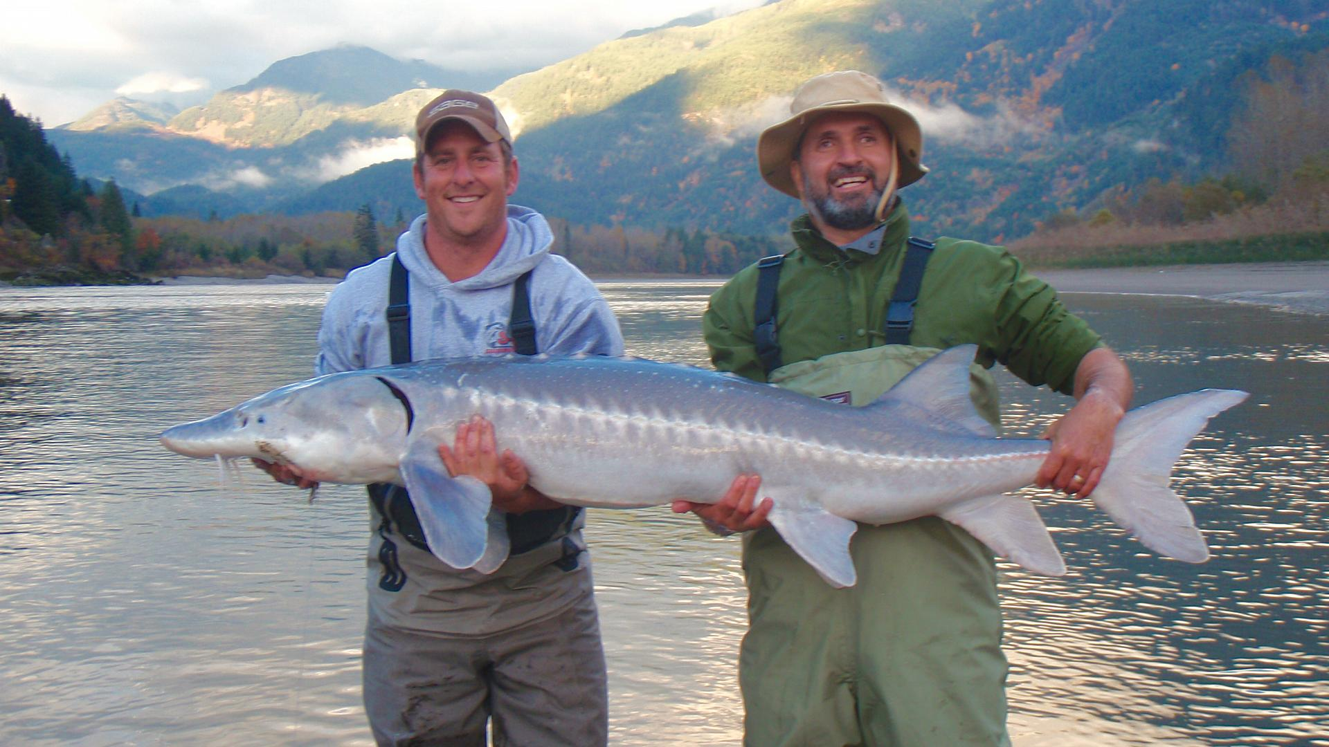 The author (above right) with fishing guide Thomas Rutschmann, and a white sturgeon—a fish species that was in serious trouble, but is now recovering. Credit: Lawrence Gunther.