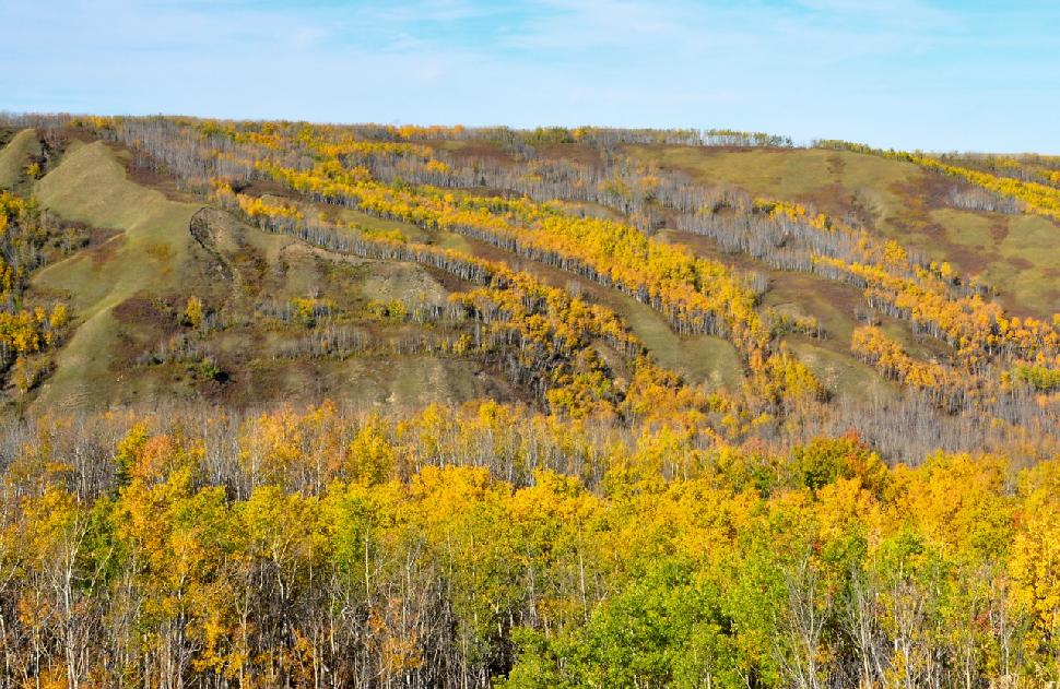 Credit: Ken Bailey. Fall colours in the Saddle Hills.