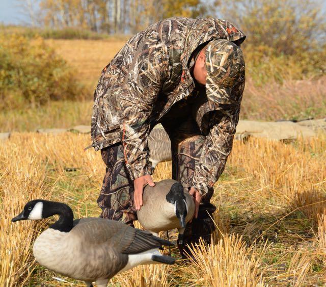 Credit: Ken Bailey. Setting up goose decoys.