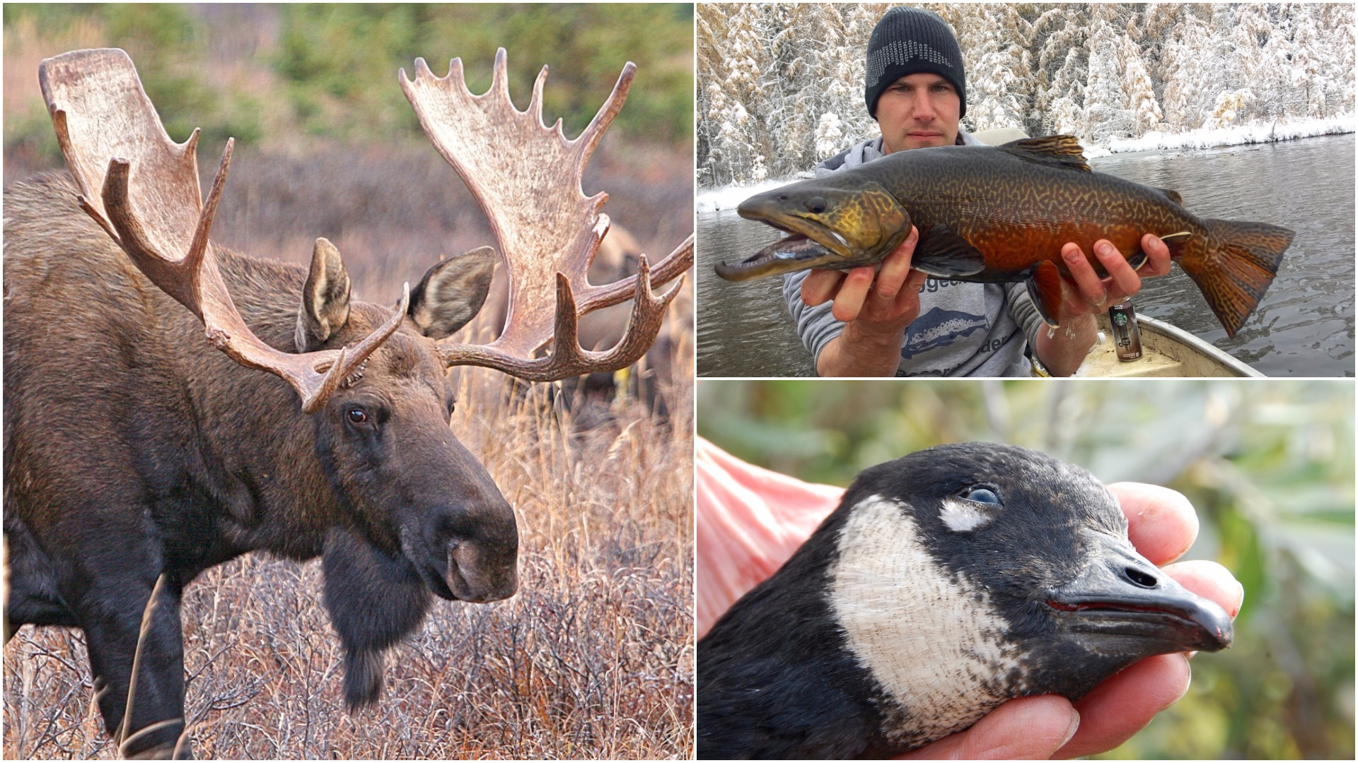 Looking for fall hunting and fishing adventure? Check out these great Canadian getaways