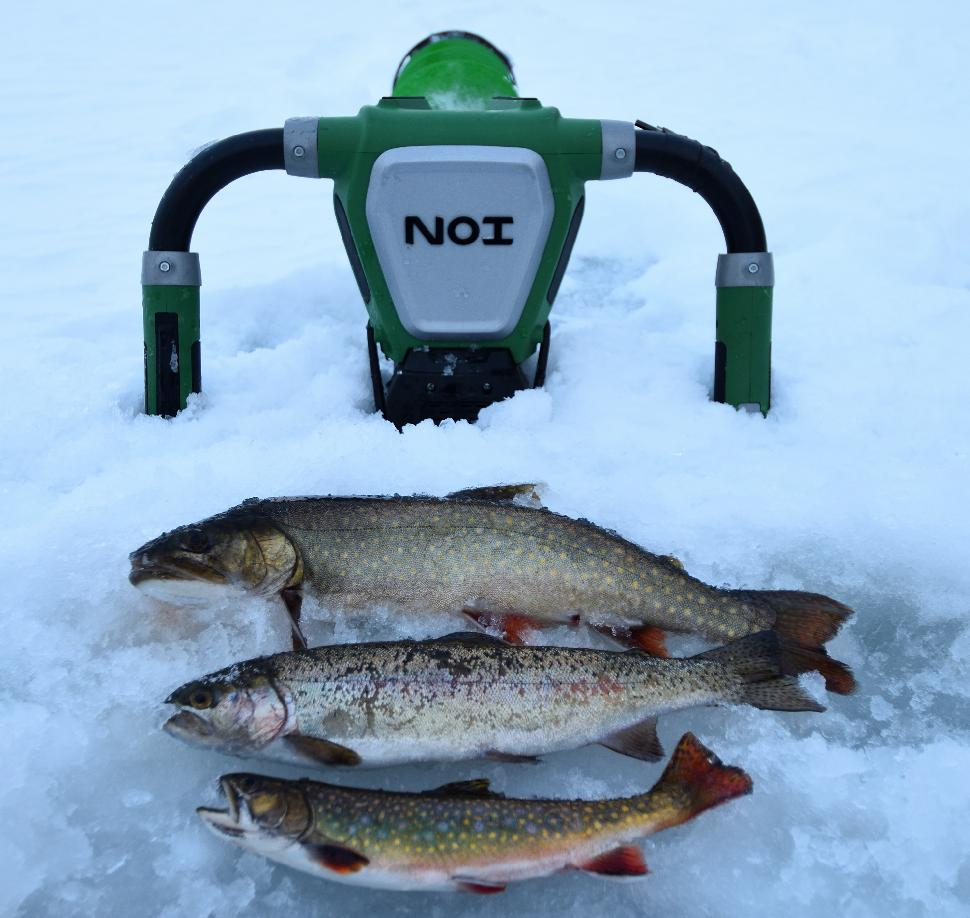 Splake and speckled trout