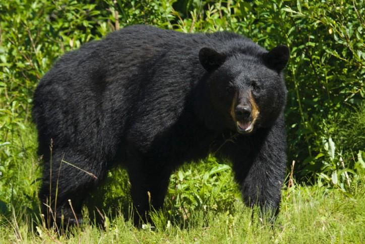 Top cartridges & bullets for black bears • Outdoor Canada
