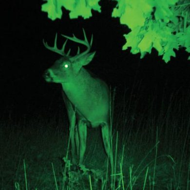 The advantages of night vision