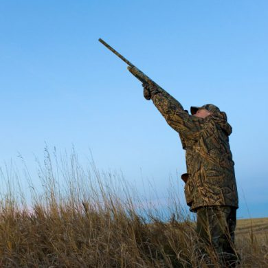 Complete guide to hunting upland birds