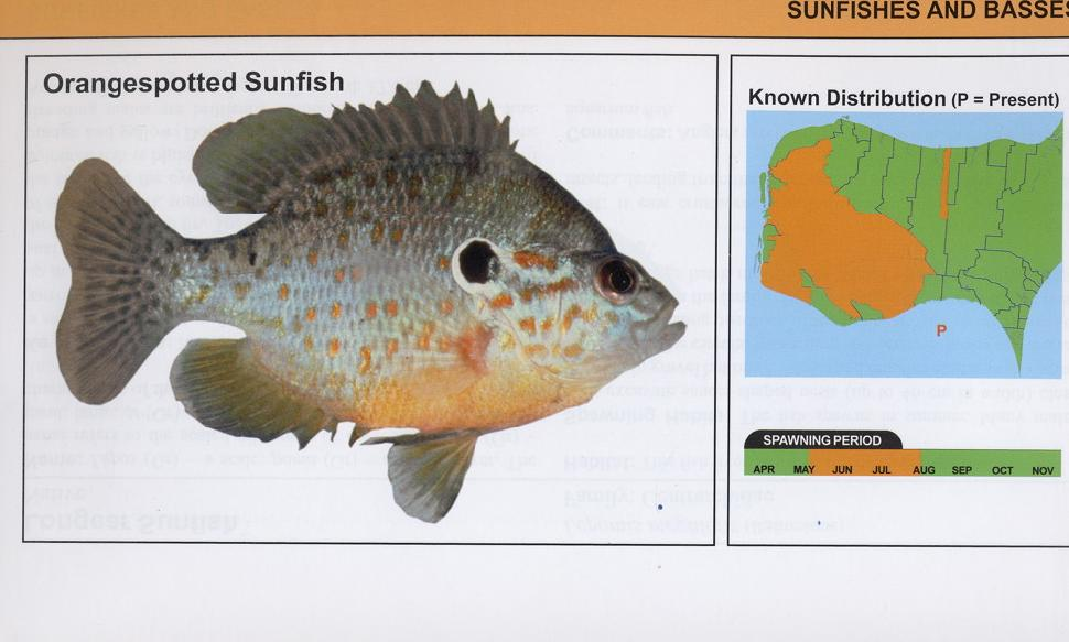 Fishes of Essex County and Surrounding Waters