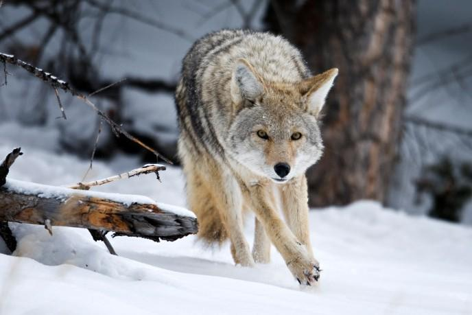 de53da9ca87bf What to hunt in winter. ShareTweet. Image Via: Len Tillim