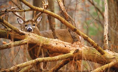 How to hunt the wariest deer in the woods • Outdoor Canada