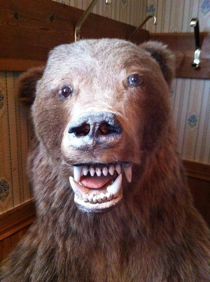 Bad bear mount