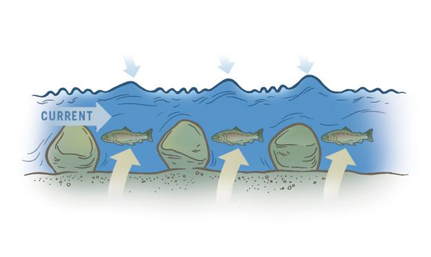 Side view: Fish hold in the soft water behind the rocks.