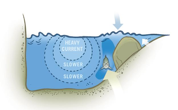 Cross-section at boulder: Fish hold downstream of the boulder.