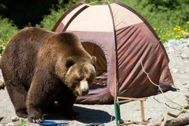 How to keep bears off your campsite