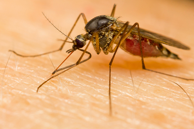 Effective insect repellents