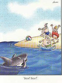 Farside shark bear