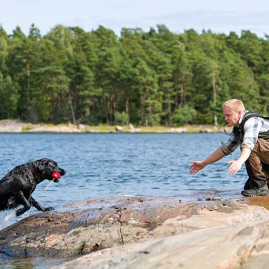 Dog sense: How to make your retriever a good swimmer
