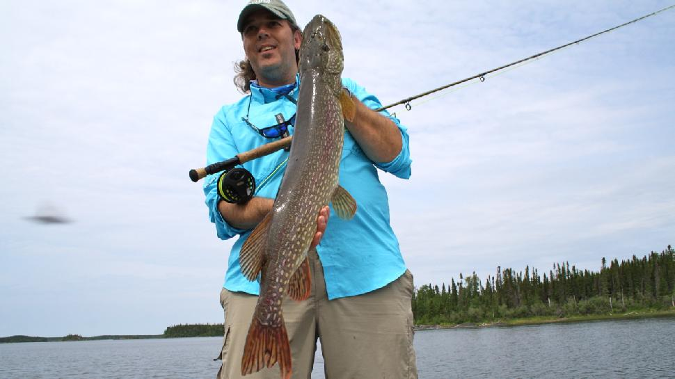Credit: Scott Gardner Even on large fish, the key is to strike quickly but not hard. For this northern pike, the author used two strip-sets to drive home the size 1/0 Lefty's Deceiver fly.