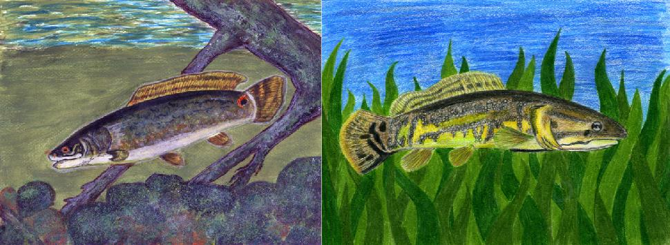 Winning fish art by Aaminah Kidwai in the Grades 4-6 category (left), and Olivia Symons in the Grades 7-9 category (right).