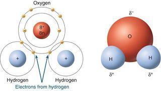 The pernicious, yet terrifyingly common dihydrogen monoxide molecule.