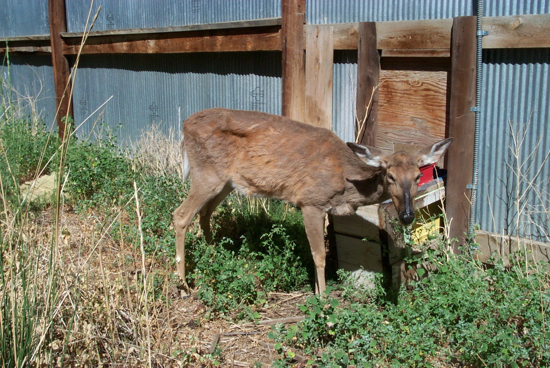Image Via Dr. Terry Kreeger, Wyoming Game and Fish Department via CWD Alliance.