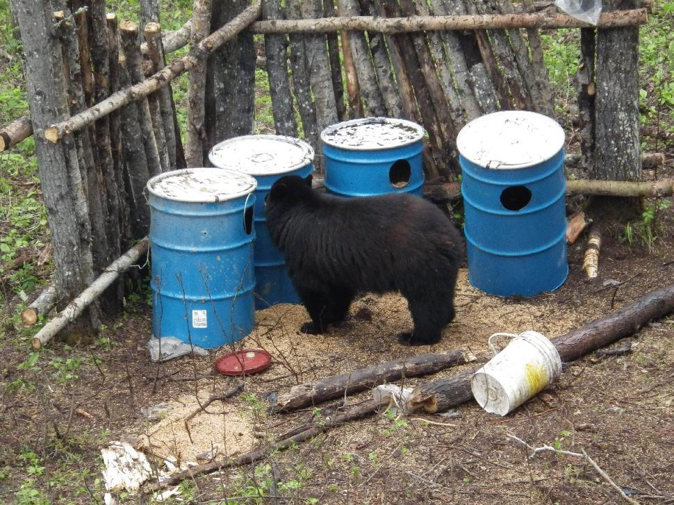 Bear Bait Station Setup
