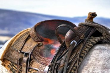 Saddle on the back of a horse