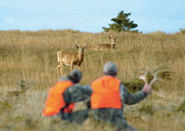 Hunters and white-tailed deer