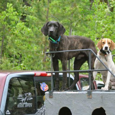 """""""Strike dogs"""" waiting to pick up a scent. Credit: T.J. Schwanky."""