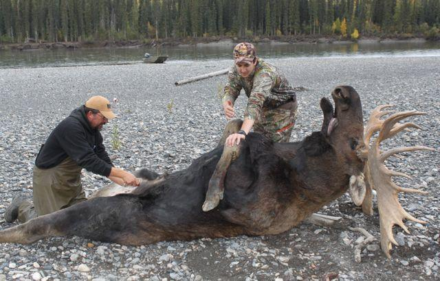 Guide Brian Arguin and cameraman Cody Altizer begin field dressing the author's bull. Credit: Cody Altizer.