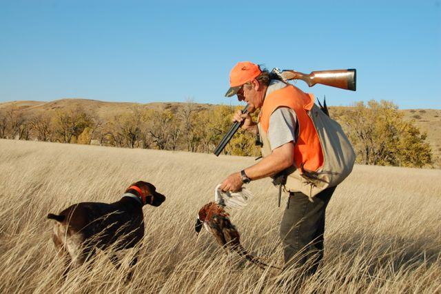Credit: Ken Bailey. When hunting pheasants over a dog, the key to success is patience.