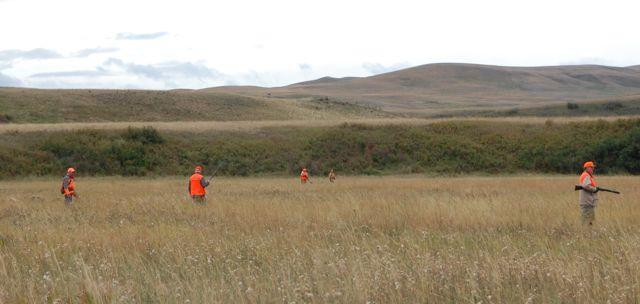 Credit: Ken Bailey. Flushes can come quickly during group hunts, making it important to wear blaze orange.