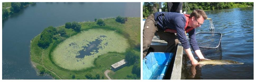 Brewer pond before and after restoration.