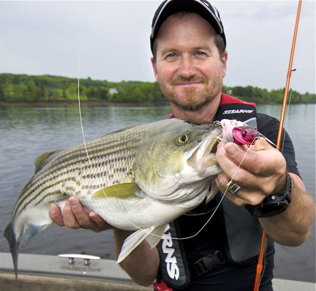 Credit: Pete Bowman. Pete Bowman and one of his countless N.B. striped bass.