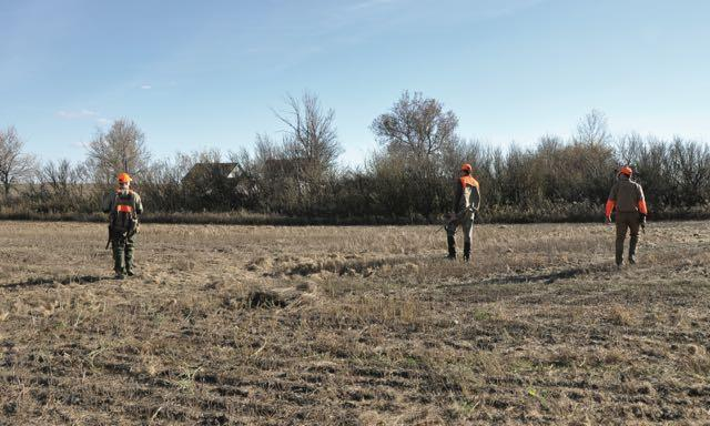 Position hunters to thwart bird escape routes. Credit: Mike Hungle.