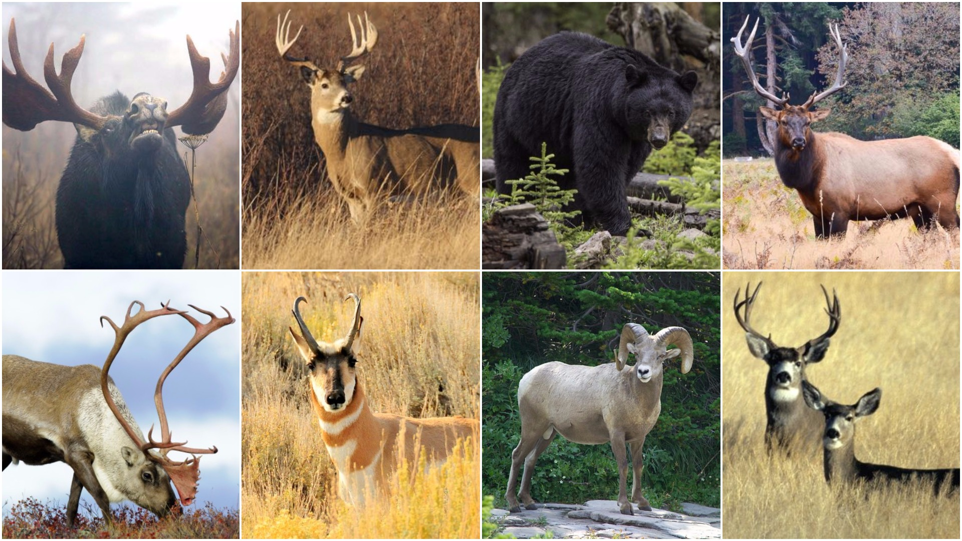 The 11 best cartridges for downing Canada's big game animals
