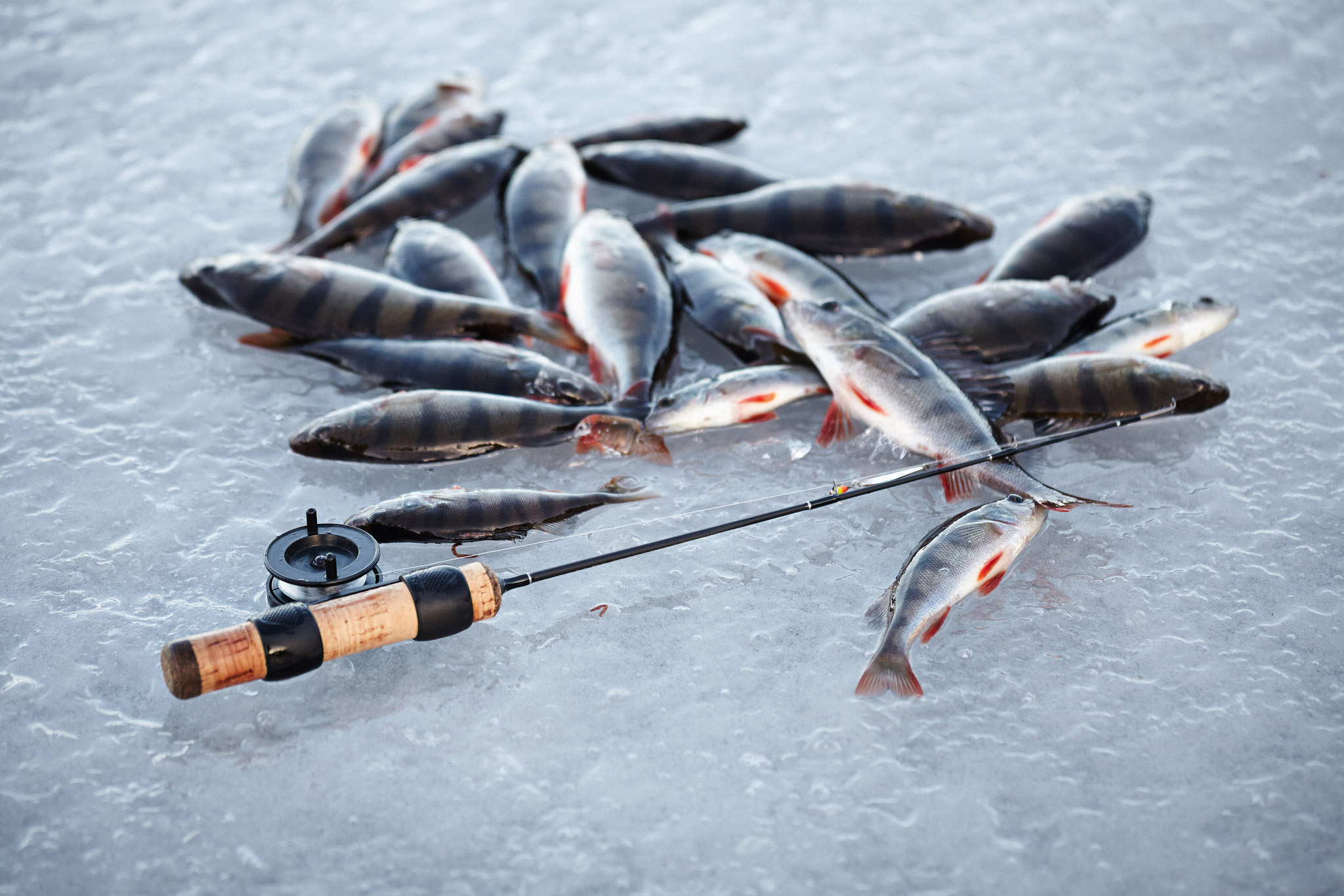 6 Ice Fishing Essentials • Outdoor Canada