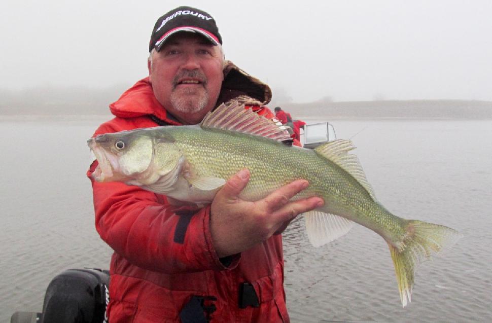 Credit: Brian Kotak. Lake Winnipeg's famous greenback walleye are on the decline.