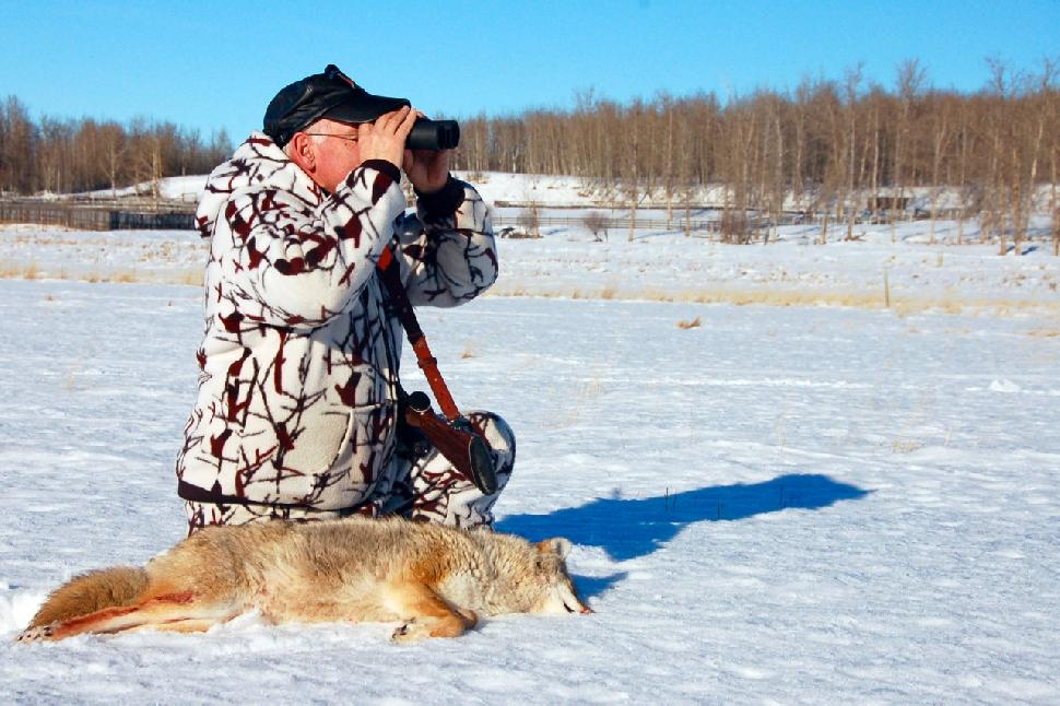 Credit: Al Voth Always be on the lookout for coyotes on the move