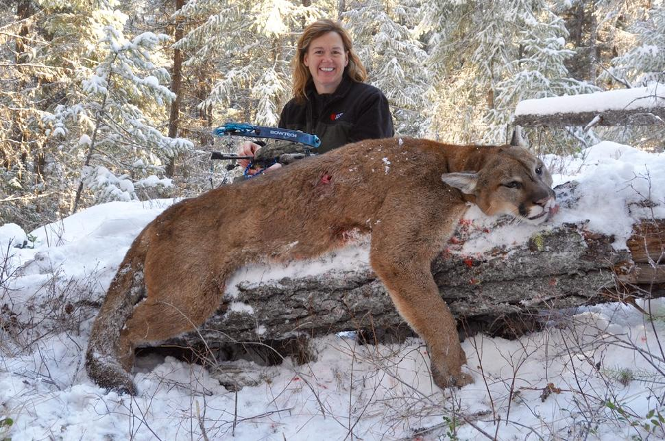 Credit: T.J. Schwanky Cougar kills tend to rile up anti-hunters