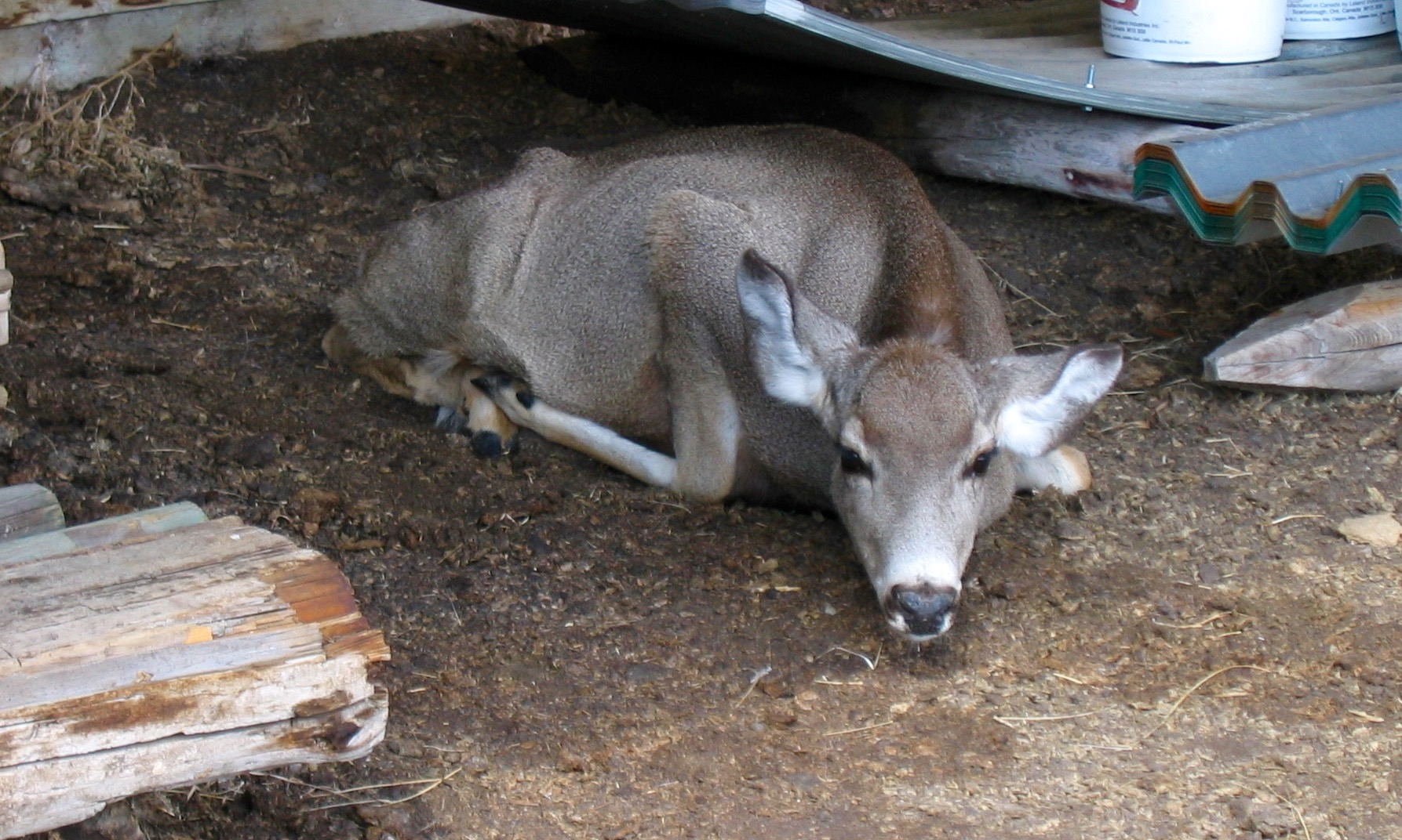 Chronic wasting disease in alberta s deer the news isn t for Ice fishing videos on youtube